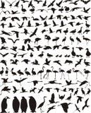 υδρόβια πουλιά πουλιών Στοκ εικόνες με δικαίωμα ελεύθερης χρήσης