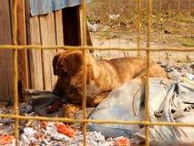 Υιοθετήσεις της Pet Άστεγο σκυλί στο ρείθρο στο ζωικό καταφύγιο Στοκ Φωτογραφίες