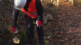 Υλοτόμος με μια μετρώντας ταινία που μετρά τη διάμετρο του κορμού δέντρων απόθεμα βίντεο