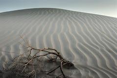 δυναμική υψηλή άμμος σειράς αμμόλοφων Στοκ Εικόνες