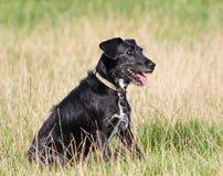 Υπάκουο σκυλί στοκ φωτογραφίες