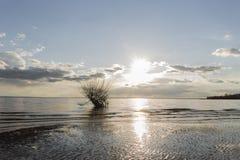υπάρχει ένα δέντρο στον ήλιο νερού Στοκ φωτογραφία με δικαίωμα ελεύθερης χρήσης