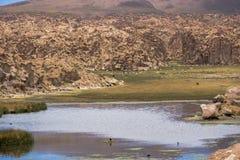 Υπάρχει ζωή στη μέση της ερήμου στοκ εικόνες