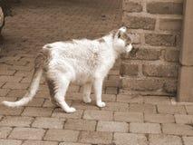Υπάρχει μια γάτα στον κήπο Στοκ Εικόνες