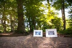 Υπέρηχος μωρών και ερχομός σύντομα πλαίσια φωτογραφιών στον κορμό δέντρων στα FO στοκ εικόνες
