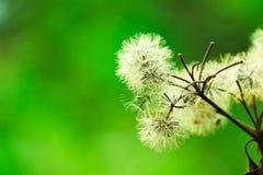 Υπέροχα ανθισμένα άσπρα λουλούδια - εικόνα στοκ εικόνα
