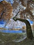 Υπέρυθρες ακτίνες φθινοπώρου - Tasik Kelana Jaya Στοκ εικόνα με δικαίωμα ελεύθερης χρήσης