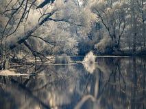 Υπέρυθρη άποψη στις κοίτες πλημμυρών Δούναβη στη Σλοβακία Στοκ Φωτογραφίες