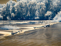 Υπέρυθρη άποψη στις κοίτες πλημμυρών Δούναβη στη Σλοβακία Στοκ Φωτογραφία