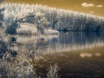 Υπέρυθρη άποψη στις κοίτες πλημμυρών Δούναβη ` s Στοκ Εικόνα