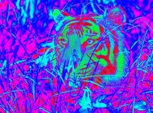 Υπέρυθρη τίγρη Στοκ Εικόνα