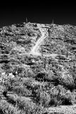 Υπέρυθρος δρόμος ερήμων στοκ εικόνες
