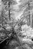 Υπέρυθρος ξύλινος φράκτης στο δασικό τοπίο στοκ εικόνες