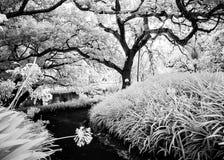 Υπέρυθρο αναμνηστικό πάρκο Χάμιλτον Νέα Ζηλανδία φωτογραφιών Στοκ φωτογραφίες με δικαίωμα ελεύθερης χρήσης