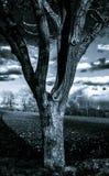 Υπέρυθρο πορτρέτο αντίθεσης του όμορφου δέντρου Στοκ Εικόνες