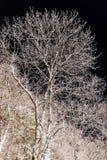 Υπέρυθρο πορτρέτο αντίθεσης του όμορφου δέντρου Στοκ Εικόνα