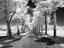 υπέρυθρο τοπίο Στοκ Φωτογραφίες