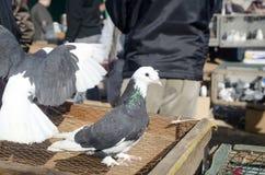 Υπαίθρια αγορά πουλιών στη Ιστανμπούλ Στοκ εικόνες με δικαίωμα ελεύθερης χρήσης