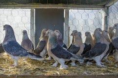 Υπαίθρια αγορά πουλιών στη Ιστανμπούλ Στοκ Εικόνες