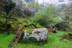 Υπαίθρια βλάστηση στη σπηλιά Στοκ εικόνα με δικαίωμα ελεύθερης χρήσης
