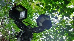 Υπαίθρια ελαφριά θέση κήπων κάτω από το δέντρο στο τροπικό πράσινο πάρκο Στοκ Φωτογραφία