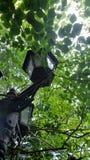 Υπαίθρια ελαφριά θέση κήπων κάτω από το δέντρο στο τροπικό πράσινο πάρκο Στοκ Εικόνες