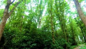 Υπαίθρια καταπληκτική φύση γύρου πάρκων απόθεμα βίντεο