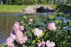 υπαίθρια πράσινη γέφυρα φύσης χρώματος αντανάκλασης νερού λουλουδιών hydrangea πάρκων κήπων Στοκ Εικόνα