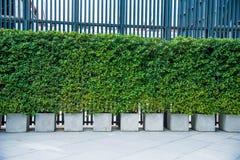 Υπαίθρια, πράσινη διακόσμηση δέντρων διακοσμήσεων κήπων στοκ φωτογραφίες