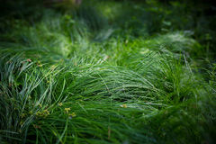 Υπαίθρια πράσινη λεπτομέρεια χλόης Στοκ Εικόνες