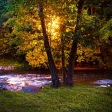 Υπαίθρια ρεύματα ποταμών φαναριών φωτίζοντας πίσω από τα δέντρα τη νύχτα Στοκ Εικόνες