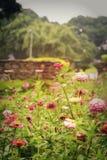 Υπαίθρια όμορφα λουλούδια φύσης πάρκων στοκ εικόνες