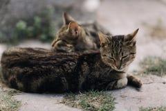 Υπαίθριες γάτες στήριξης Στοκ εικόνα με δικαίωμα ελεύθερης χρήσης