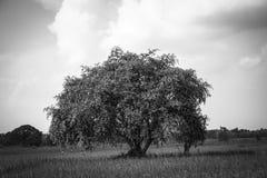 Υπαίθριος γραπτός τομέων δέντρων στοκ εικόνα