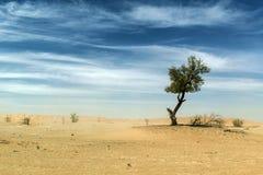 Υπαίθριο άμμου δέντρων στάσης αμμόλοφων του Ομάν khali Al τριψίματος ερήμων ουρανού παλαιό Στοκ Εικόνα