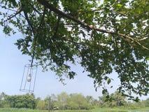 Υπαίθριο δέντρο φύσης με το φως λαμπτήρων στο φως της ημέρας Στοκ Εικόνες