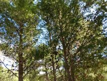 Υπαίθριο δέντρο Στοκ Εικόνες