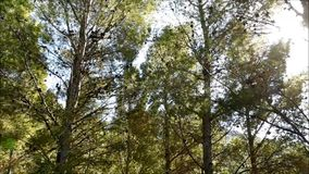 Υπαίθριο δέντρο απόθεμα βίντεο