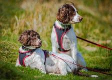 Υπαίθριο ευτυχές πορτρέτο σκυλιών Στοκ Εικόνα