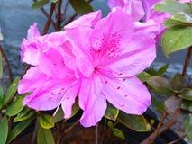 Υπαίθριο λουλούδι της Daisy στοκ εικόνα με δικαίωμα ελεύθερης χρήσης