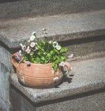 Υπαίθριο δοχείο λουλουδιών Μαργαρίτες λουλουδιών Στοκ φωτογραφία με δικαίωμα ελεύθερης χρήσης