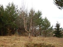 υπαίθριο πάρκο Στοκ φωτογραφία με δικαίωμα ελεύθερης χρήσης