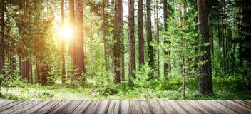 Υπαίθριο τοπίο υποβάθρου οικολογίας Στοκ φωτογραφίες με δικαίωμα ελεύθερης χρήσης