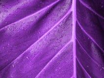 Υπεριώδες υπόβαθρο φιαγμένο από φρέσκα πράσινα φύλλα Υπεριώδες σκηνικό για το σχέδιό σας Καθιερώνουσα τη μόδα έννοια χρώματος του Στοκ φωτογραφία με δικαίωμα ελεύθερης χρήσης
