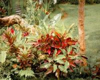 Υπερφυσικά χρώματα του τροπικού κήπου φαντασίας Στοκ Εικόνα
