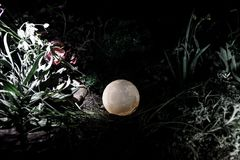 Υπερφυσική έννοια φαντασίας - πανσέληνος που βρίσκεται στη χλόη Διακοσμημένη φωτογραφία Αφηρημένα υπόβαθρα νεράιδων Στοκ εικόνα με δικαίωμα ελεύθερης χρήσης