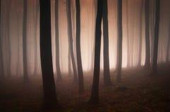 Υπερφυσικό δάσος με την κόκκινη ομίχλη και το φως Στοκ φωτογραφίες με δικαίωμα ελεύθερης χρήσης