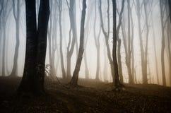 Υπερφυσικό δάσος το φθινόπωρο στο ηλιοβασίλεμα Στοκ εικόνες με δικαίωμα ελεύθερης χρήσης