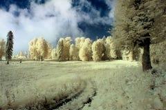 Υπερφυσικό θερινό τοπίο, με το κίτρινο δάσος στοκ φωτογραφία με δικαίωμα ελεύθερης χρήσης