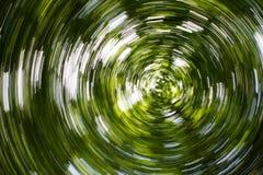 Υπνωτική μουτζουρωμένη επίδραση κύκλων Defocused δασική στοκ εικόνες με δικαίωμα ελεύθερης χρήσης